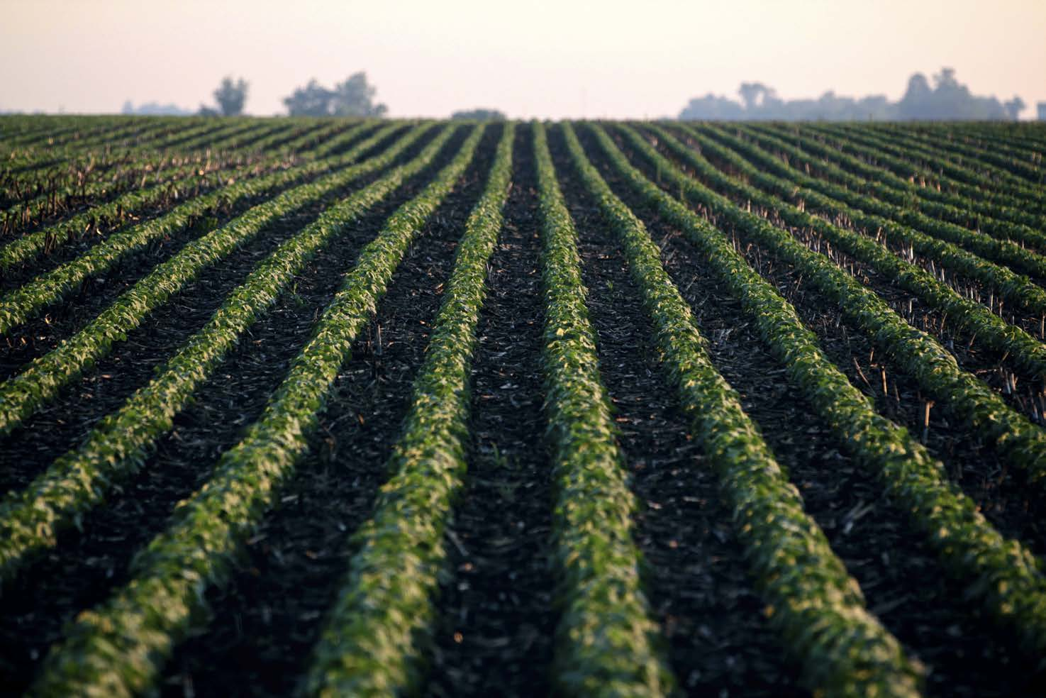 p01 soybeans