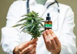 merimed_marijuana
